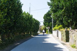 沖縄 今泊の風景の写真素材 [FYI03378149]