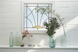 窓辺を飾る植物の写真素材 [FYI03378353]