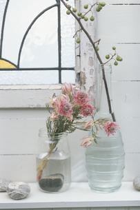 窓辺を飾るフェルリアの花の写真素材 [FYI03378356]