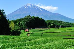 富士市大渕笹場より見た茶畑と富士山の写真素材 [FYI03378477]