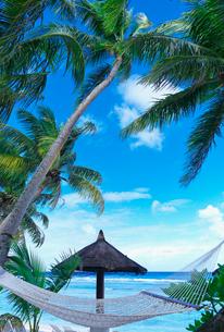 青い海とヤシの木とハンモックの写真素材 [FYI03378479]