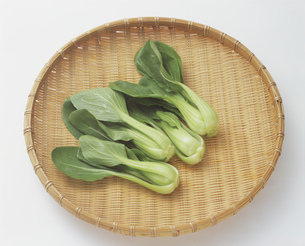 小春菜の写真素材 [FYI03378566]