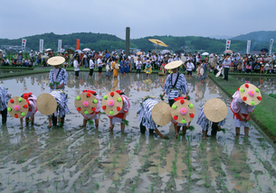 伊雑宮御田植祭の写真素材 [FYI03379435]