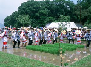伊雑宮御田植祭の写真素材 [FYI03379436]