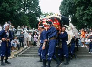 冠桜神社秋祭 夫婦大獅子の写真素材 [FYI03379442]