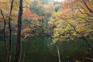 紅葉の竜ヶ窪の水の写真素材 [FYI03379618]