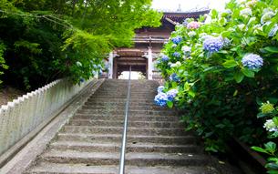 あじさい咲く長慶寺の写真素材 [FYI03379681]