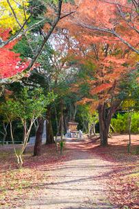紅葉の相撲神社の写真素材 [FYI03379693]
