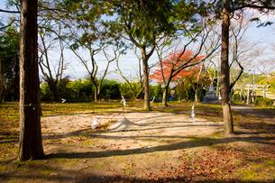 紅葉の相撲神社の写真素材 [FYI03379702]
