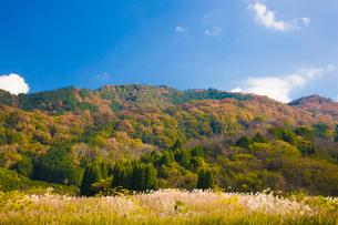 巻向山を背にススキが揺れる山の辺の道の写真素材 [FYI03379706]