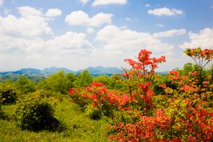 神野山々頂に咲く山つつじの写真素材 [FYI03379751]