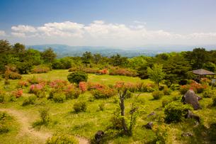 神野山々頂に咲く山つつじの写真素材 [FYI03379754]