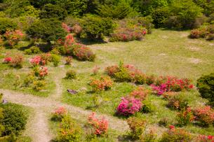 神野山々頂に咲く山つつじの写真素材 [FYI03379758]