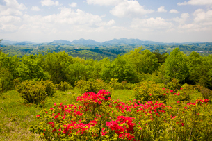 神野山々頂に咲く山つつじの写真素材 [FYI03379766]