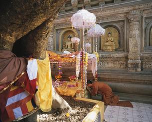 マハーボーディ寺院(菩提寺) インドの写真素材 [FYI03380041]