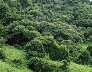 小野のシダレグリ自生地の写真素材 [FYI03380984]