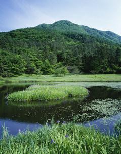 カキツバタ咲く姫逃池と三瓶山の写真素材 [FYI03381038]