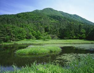 カキツバタ咲く姫逃池と三瓶山の写真素材 [FYI03381045]