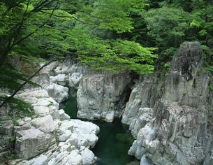 新緑の表匹見峡の写真素材 [FYI03381046]