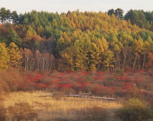 ミヤマウメモドキ咲く唐花見湿原の写真素材 [FYI03381053]