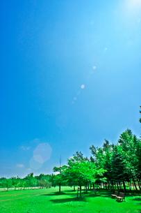 新緑の写真素材 [FYI03382213]