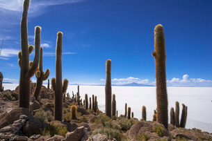 ウユニ塩湖のインカ・ワシ島の写真素材 [FYI03382245]