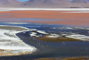 アルティプラーノ平原のラグナ・コロラダの景観の写真素材 [FYI03382276]