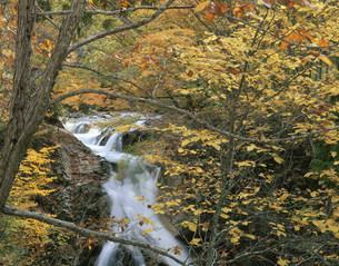 照葉峡岩魚の滝の写真素材 [FYI03382334]