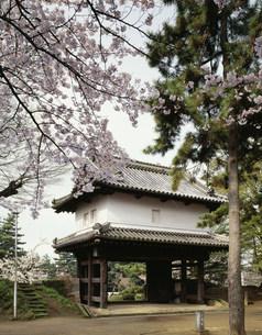 桜咲く亀城公園(土浦城跡)の写真素材 [FYI03382338]