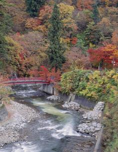 中野紅葉山の紅葉の写真素材 [FYI03382342]