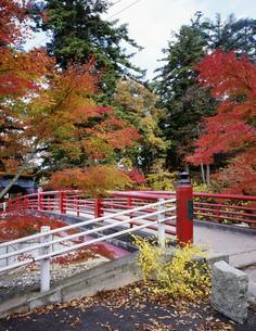 中野紅葉山の紅葉の写真素材 [FYI03382354]