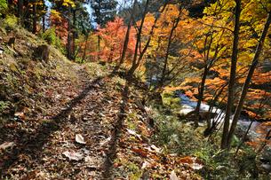 秋の強滝遊歩道の写真素材 [FYI03382402]