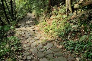 旧箱根街道猿沢石畳の写真素材 [FYI03382404]