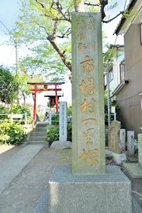 市場村一里塚の写真素材 [FYI03382426]