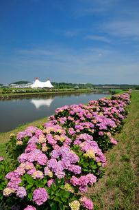 栗山川とアジサイの写真素材 [FYI03382459]