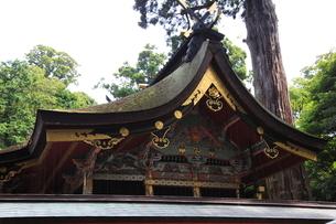 鹿島神宮 神殿の写真素材 [FYI03382578]