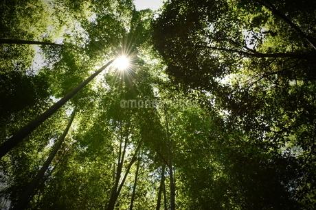森林の写真素材 [FYI03382589]