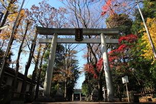荻窪八幡神社 鳥居と参道の写真素材 [FYI03382593]