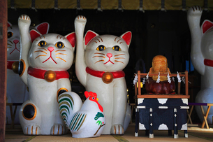 今戸神社拝殿内の招き猫の写真素材 [FYI03382673]