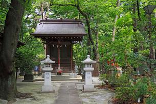 新宿十二社熊野神社末社大島三社の写真素材 [FYI03382742]