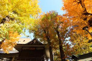 小野照崎神社神楽殿の写真素材 [FYI03382759]
