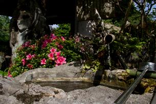 秩父三十四ヵ所 第二十七番 大渕寺の延命水とさつきの写真素材 [FYI03382865]