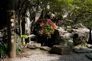 秩父三十四ヵ所 第二十七番 大渕寺の延命水とさつきの写真素材 [FYI03382935]