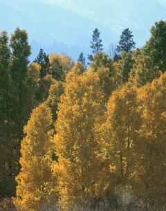 黄葉のタイオガロードの写真素材 [FYI03383179]