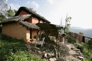 グルン族の家の写真素材 [FYI03383416]