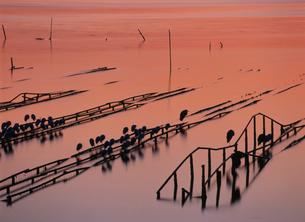 瀬戸内海の朝 かき座の鳥たちの写真素材 [FYI03383926]