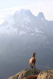 シュタインボックとヴェルト針峰の写真素材 [FYI03384003]