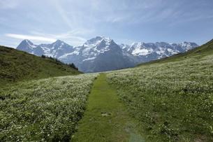 グリュッチュアルプ駅~アルメントフーベルのハイキングコースよりベルナーオバーランドの山の写真素材 [FYI03384007]