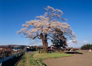 北館桜の写真素材 [FYI03384599]