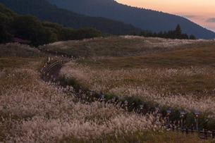 曽爾高原のススキの写真素材 [FYI03384620]